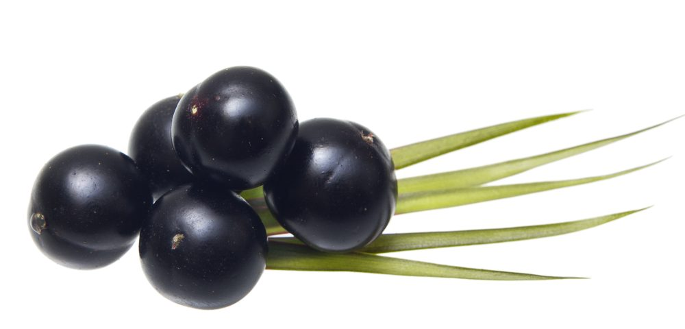 Açaí Palm Extract May Be Promising Therapeutic Agent for Endometriosis