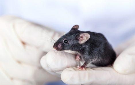 MicroRNA Let‐7b Seen as Potential New Therapy for Endometriosis in Mouse Study