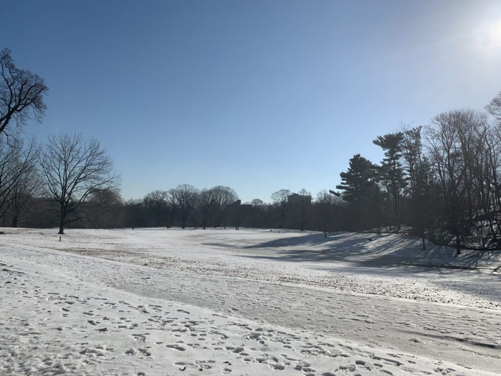 Prospect park in the snow