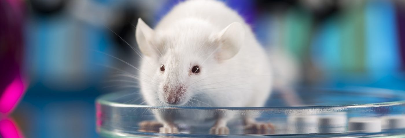 Interleukin-37 Seen to Block Lesion Growth in Endometriosis Mouse Model